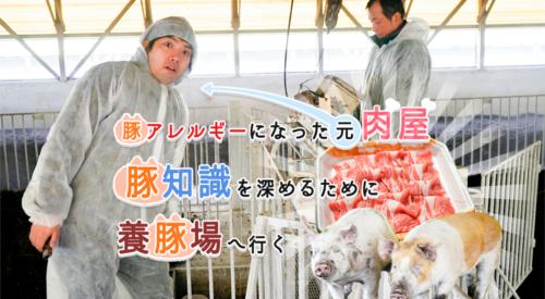 豚アレルギーになった元肉屋、豚知識を深めるために養豚場へ行く