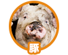 f:id:ryo_kato:20160516181141p:plain