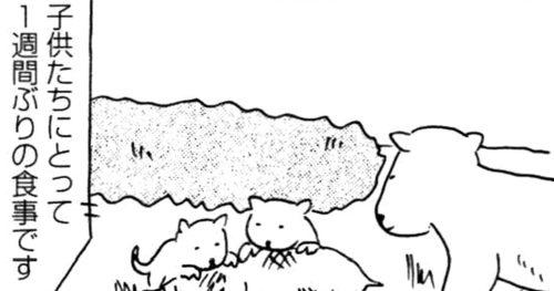 【8コマ漫画】木下晋也 『特選!ポテン生活』 (11) – 自然の掟/瞳を閉じて