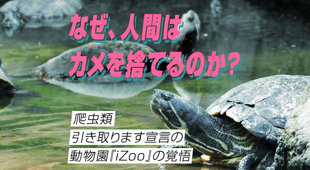 「なぜ、人間はカメを捨てるのか?」爬虫類引き取ります宣言の動物園『iZoo』の覚悟