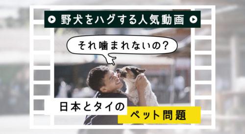 野犬をハグする人気動画 -「それ噛まれないの?」日本とタイのペット問題