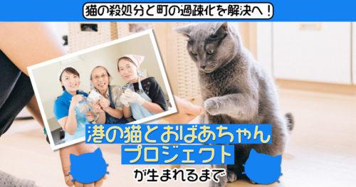 猫の殺処分と町の過疎化を解決へ!「港の猫とおばあちゃんプロジェクト」が生まれるまで