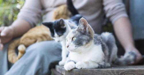 「縁側ネコ農法」記事に関しましておわびとご報告