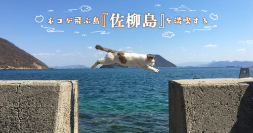 ネコが飛ぶ島『佐柳島』を満喫する【島民の数より猫が多い!】